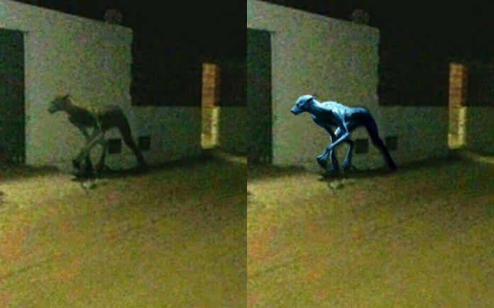 Makhluk Aneh Mirip Anjing Gegerkan Warga Argentina: Hoax